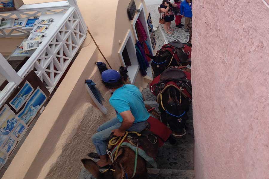 donkey-ride-santorini